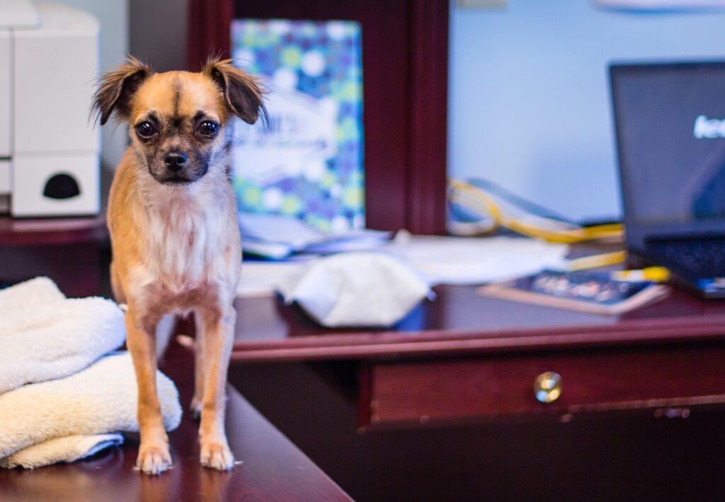 Pies wbiurze – wpływ zwierząt namiejsce pracy